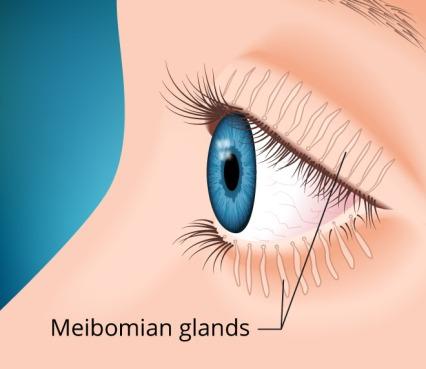 meibomian-glands-660x573